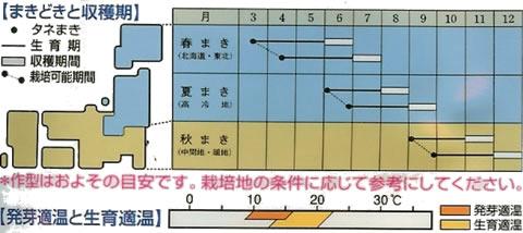 食用ビーツ デトロイト・ダークレッド(10ml)