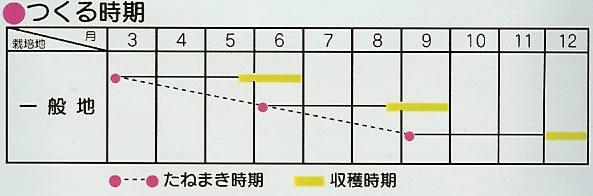 ごぼう種 ダイエット サラダごぼう(10ml)〜サカタのタネ〜