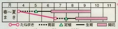 百日草 ダリア咲ドリーム(2.5ml) 〜花のタネ〜