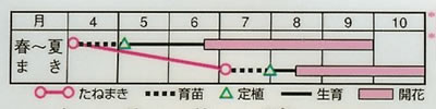 百日草 F1ドリームランド混合(2.5ml) 〜花のタネ〜