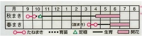 フロックス ドラモンディ混合 (0.8ml)