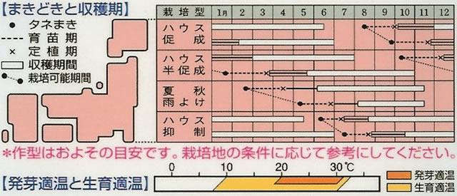 中玉トマト種 フルティカ(18粒)〜タキイ交配〜