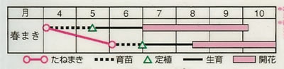 サルビア ホットジャズ(0.6ml) 〜花のタネ〜
