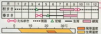 ほおずき 丹波ほおずき(0.8ml)〜花のタネ〜
