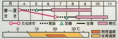 百日草 ダリア咲きエクスクイジート(2.5ml) 〜花のタネ〜