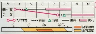 百日草 サンボウ混合(2.5ml) 〜花のタネ〜