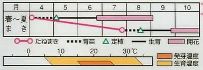 百日草 ザハラミックス(30粒) 〜花のタネ〜