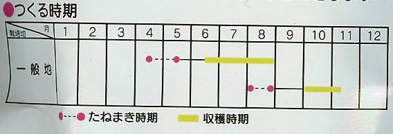 つるありいんげん種 ジャンビーノ(35ml)