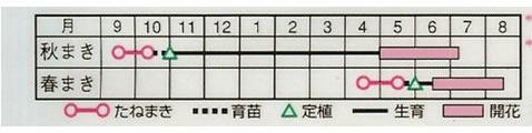 カーネーション シャボー混合(0.4ml)