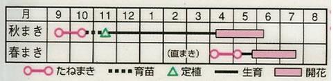 かすみ草 コベントガーデン (1.8ml)