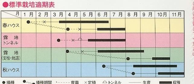 キュウリ種 夏秋節成り(2ml)〜OS交配〜