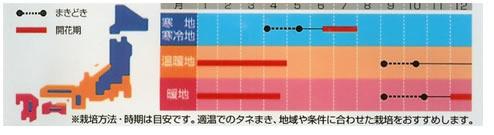 金盞花 改良早生中安(3ml)