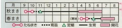 金盞花 スター混合(5ml)