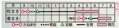金盞花 八重咲混合(3ml)