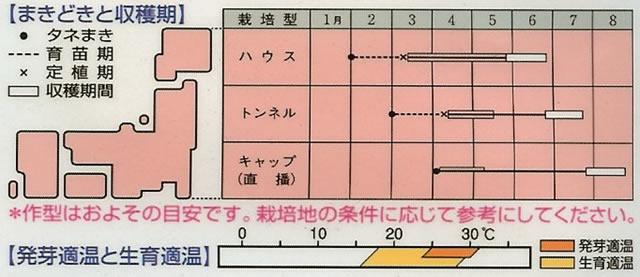 メロン種 金太郎(70粒)〜タキイ交配〜