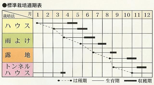 ネギ種 こねぎ一番(8ml)