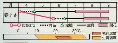 朝顔 紅冠(1ml) 〜花のタネ〜