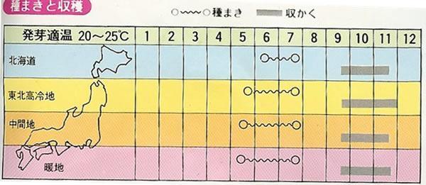 大豆種 黒大豆(15ml)