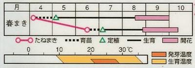 けいとう 久留米混合(0.4ml) 〜花のタネ〜