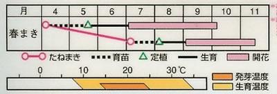 アフリカンマリーゴールド レディミックス(0.5ml) 〜花のタネ〜