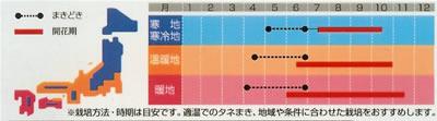 マリーゴールド マムレモン(1ml) 〜花のタネ〜