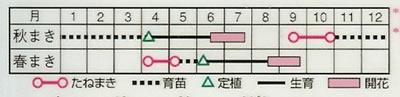 アスター マーガレット混合(1ml) 〜花のタネ〜