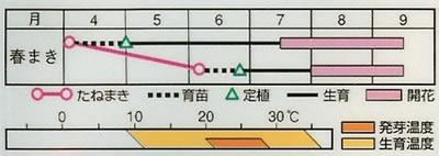 朝顔 松風(1ml) 〜花のタネ〜