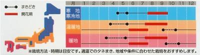 アスター 松本混合(1ml) 〜花のタネ〜