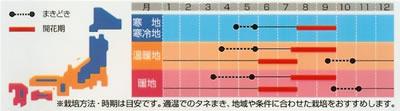 アスター 松本ピンク(1ml) 〜花のタネ〜