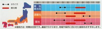 アスター 松本イエロー(1ml) 〜花のタネ〜