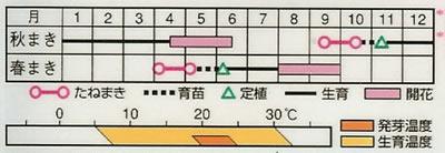 帝王貝細工 モンストロサ混合(1.5ml) 〜花のタネ〜