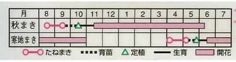 パンジー F1ナチュレ混合 (0,15ml)