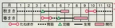 アスター ネネ混合(0.5ml) 〜花のタネ〜