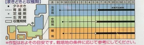 たまねぎ 種  ネオアース (3.5ml)