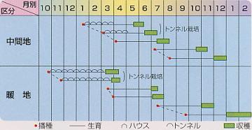 冬まき野菜の種・にんじん種〜まき時と収穫期〜
