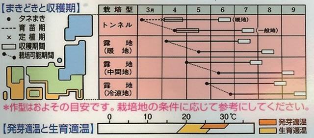 エダマメ種 黒エダマメ 濃姫(茶毛種)(15ml)