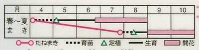 百日草 オールドメキシコ(2ml) 〜花のタネ〜