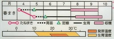 おもちゃ南瓜(2.5ml)〜花のタネ〜