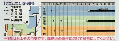 たまねぎ 種  O・P黄 (9ml)