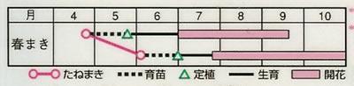サルビア ファロアミックス(0.4ml) 〜花のタネ〜