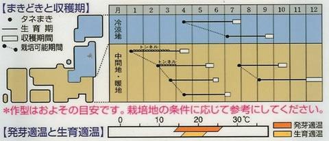 ミニにんじん種 ピッコロ (8ml)