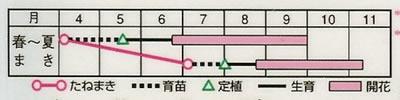 百日草 ダリア咲ポーラベア(2.5ml) 〜花のタネ〜