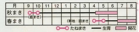 ポピー虞美人草混合(1,2ml)