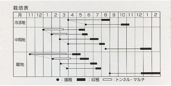 にんじん種 楽 陽(ペレット種子550粒)〜宝種苗〜
