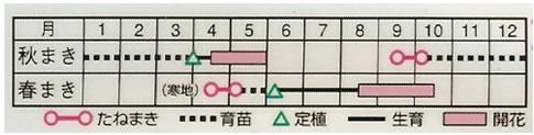 ロベリア エリナス混合 (0.2ml)