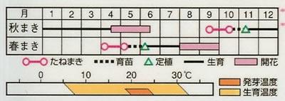 帝王貝細工 サルタン混合(0.6ml) 〜花のタネ〜