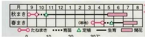 石竹 ヘッデウイギ大輪一重咲混合(1.2ml)