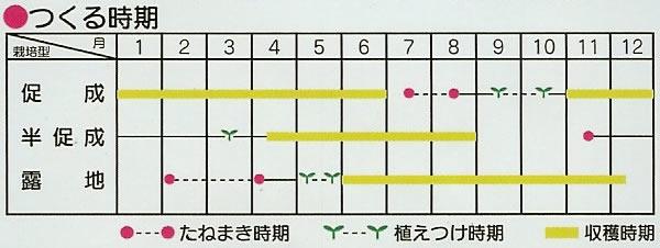 カラーピーマン種 フルーツパプリカ セニョリータ(11粒)〜サカタ交配〜