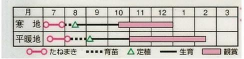 葉牡丹 瀬戸の日の出(0.5ml)