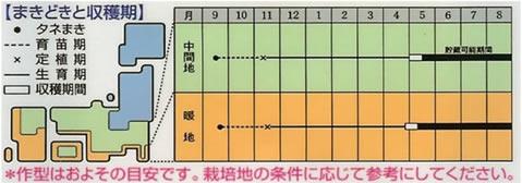 たまねぎ 種  ソニック (7ml)